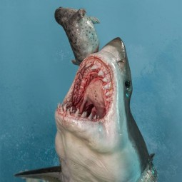 Weisser Hai (Carcharodon carcharias) - Museum Series - 1/4 Scale Statue